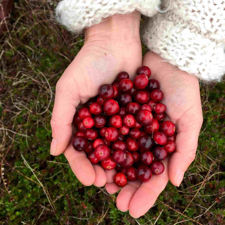Vlieland cranberry