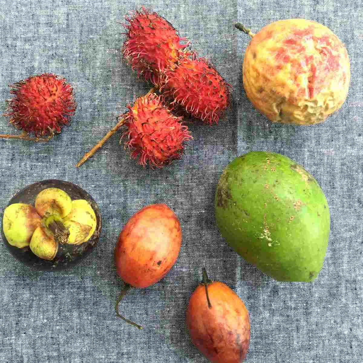 11 fruit Bali lr